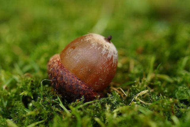 acorn-990846_640