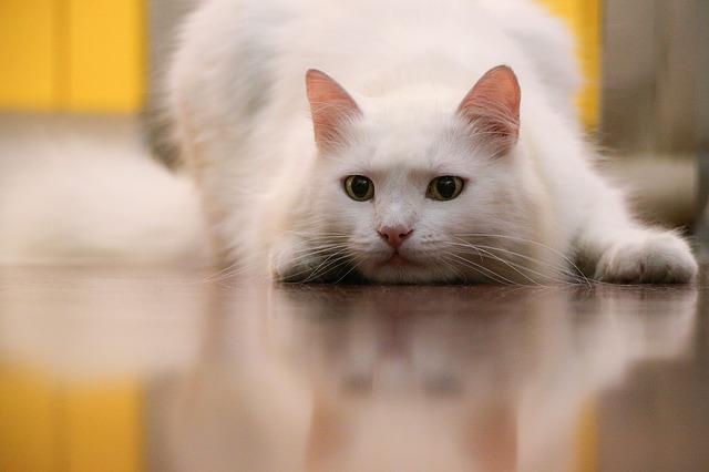 cat-1826120_640