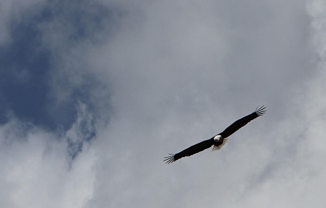 bald-eagle-2080400_1280