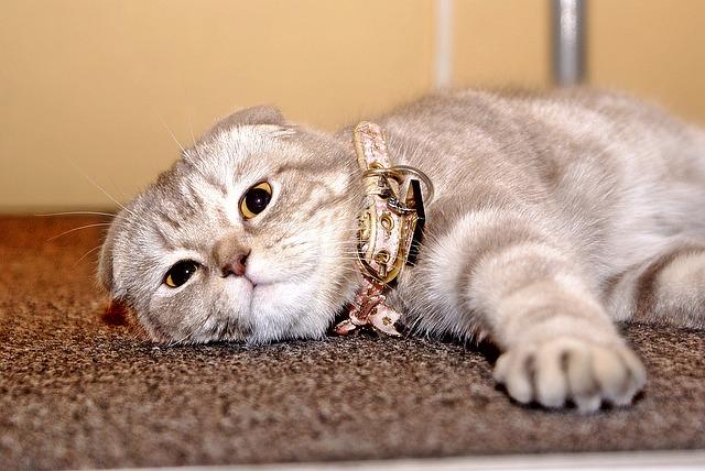 cat-775717_640
