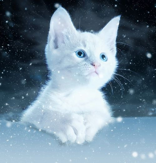 white kitten in snow