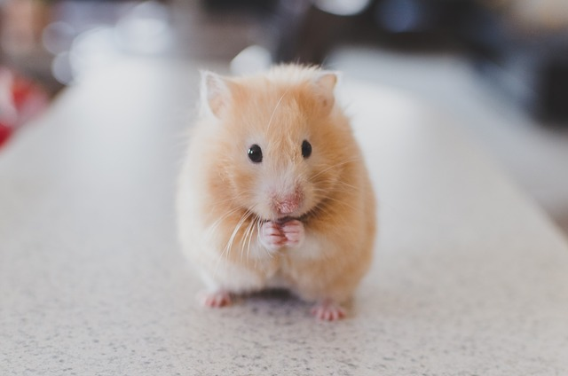 hamster looking nervous